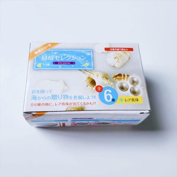 発掘シリーズ貝殻